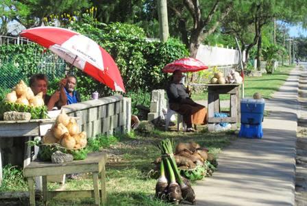 Coconut and Taro Root along Vuna Road in Nukualofa Tonga
