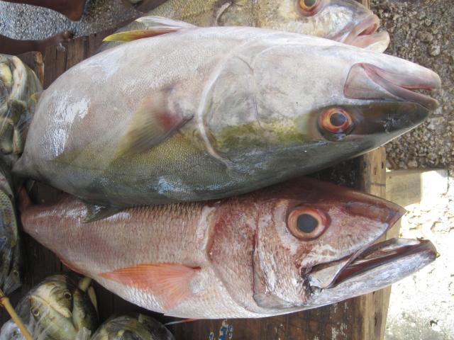 Fresh Snapper in Nuku'alofa, Tonga