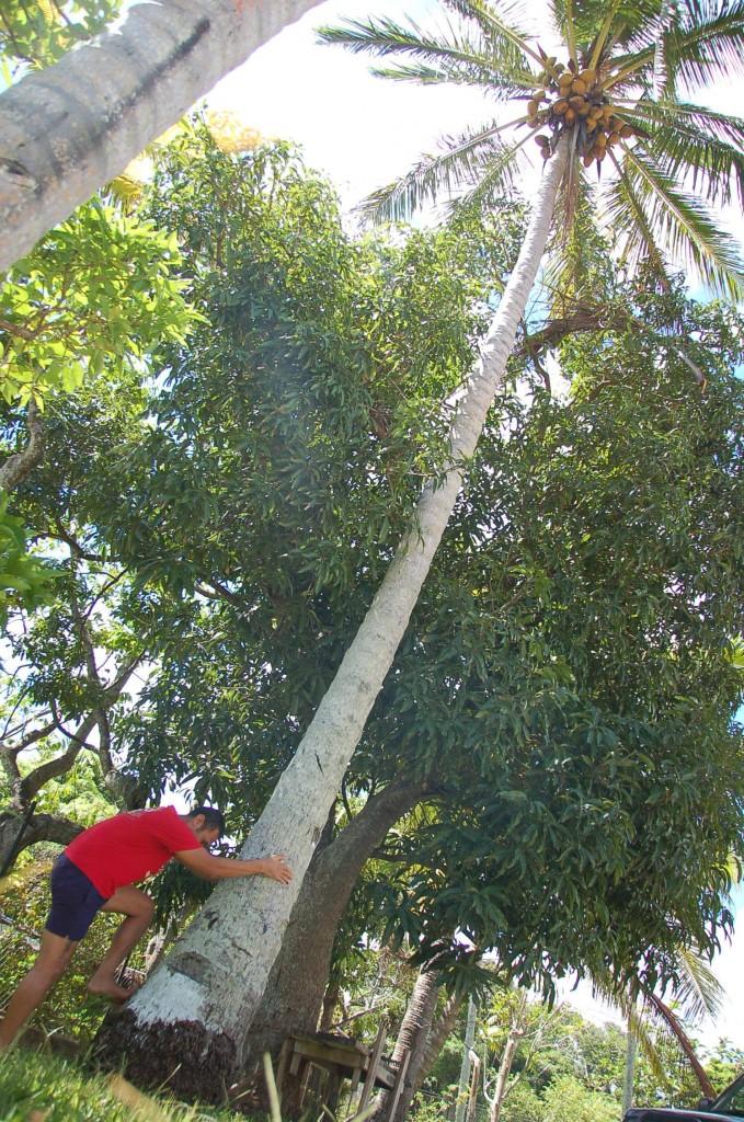 Toni at base of tree
