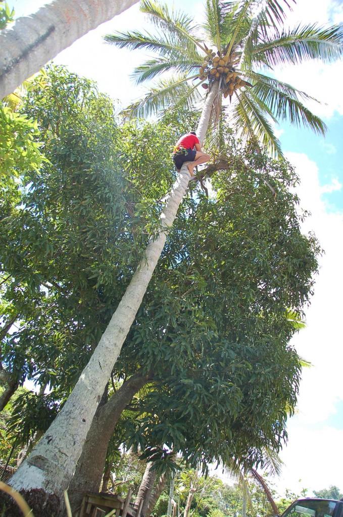Toni Descending Tree
