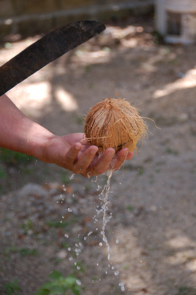 Cracking the coconut for coconut cream