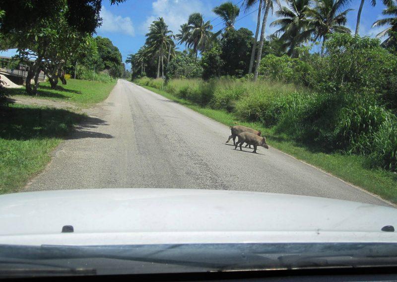 Puaka Crossing, Nukualofa, Tonga