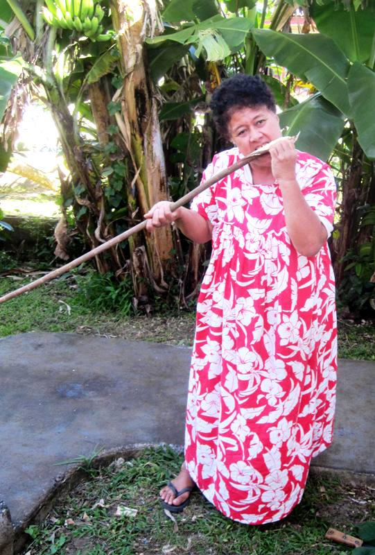 Stripping outer bark from paper mulberry tree.Tapa Making in Tonga