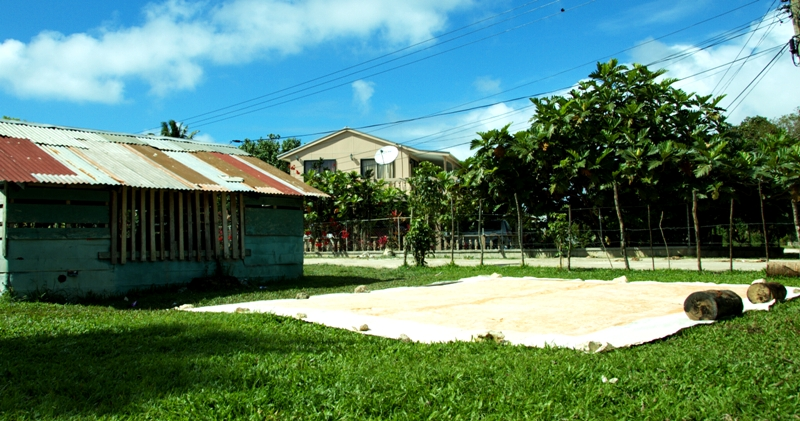 Tapa cloth drying in the sun outside kava hut.Tonga