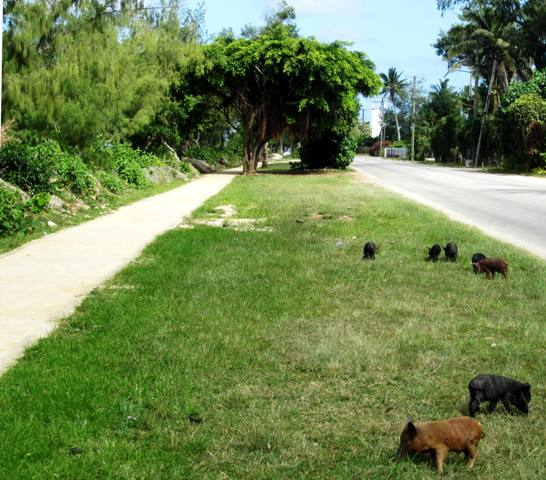 Vuna Road Walking Path.Tongatapu Tonga