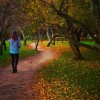 Strolling through Kyoto Imperial Palace Park on a November afternoonhellip