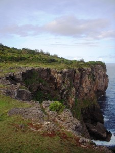 'Eua South Side: Cliffs of Rock Garden and Feral Horses
