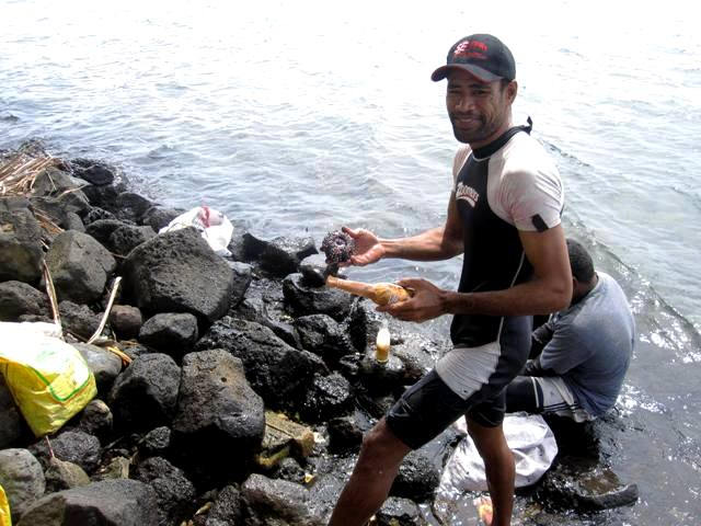 Collecting Sea Urchins to Sell at Market, Apia Samoa