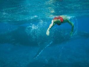 Swimming with Humpback Whales, 'Eua Tonga