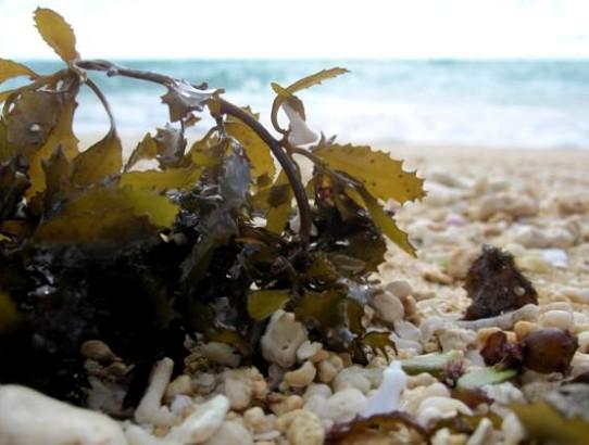Houmale'eia Beach, Foa Ha'apai