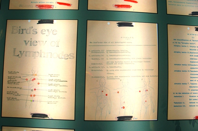 Q Report Exhibit, documenting affects of infecting humans with  Bubonic Plague.  This report was one of several that the US purportedly bartered to obtain in exchange for providing safe passage to General Ichi of Unit 731