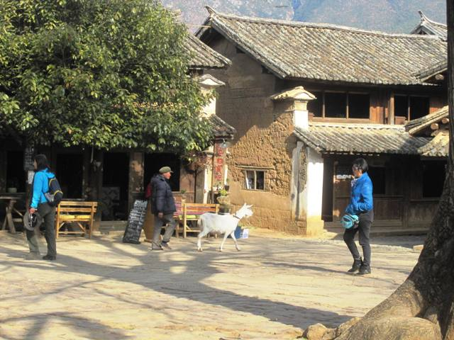 Shaxi Old Town. Goat on Sideng Square