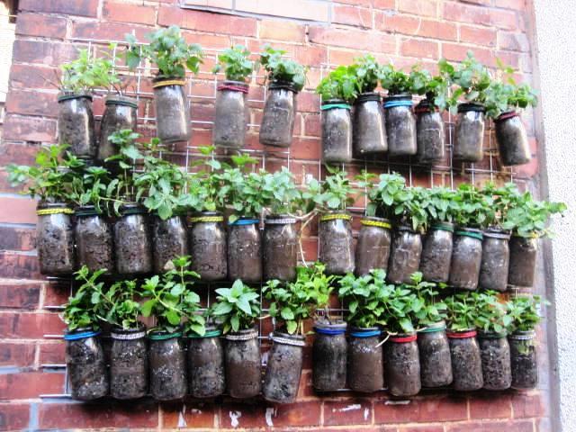 Herbs growing in alleyway; Tian Zi Fang, Shanghai