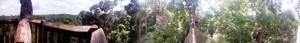 Panorama of Canopy Walk at Bukit Bangkirai