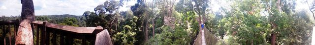 Panorama of Canopy Walk