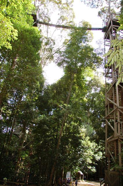 A little perspective ... A ground view of Bukit Bangkirai's canopy bridges