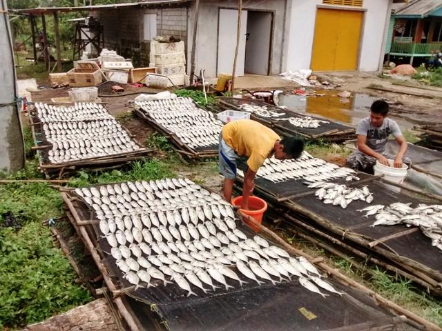 Drying Fish. Penajam fishing village, East Kalimantan, Indonesia