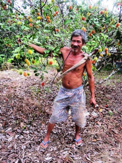 Rambutan orchard owner standing by (what I think is) a Garuda Rambutan tree.