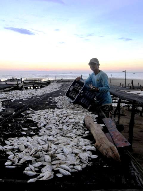 Ambo carrying fish (5)