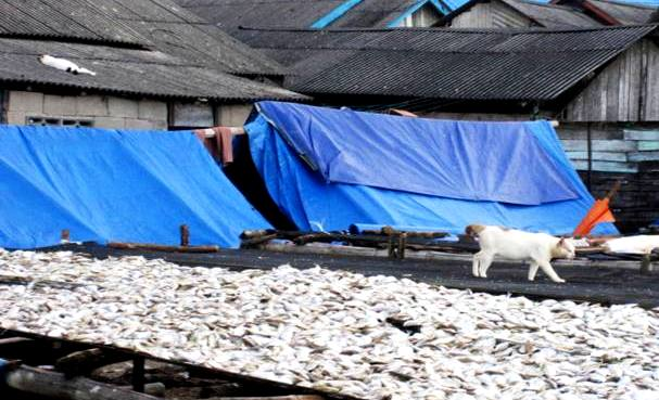 Cat on a hot tarp roof