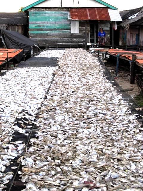 Drying fish. Manggar Beach
