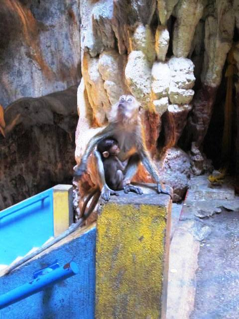 Mother and baby macaque inside main cavern