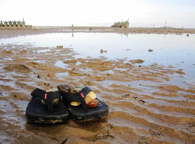 Siut's kerang (clams)