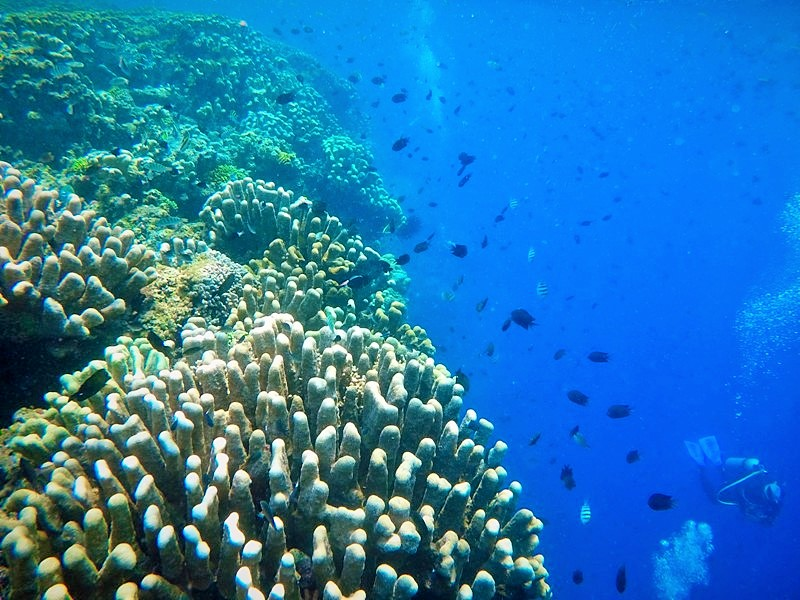 Go Pro. Coral-Reefs-of-Bunaken-and-Manado-Indonesia