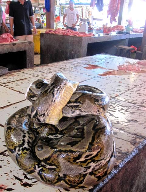 Python at Tomohon Market.Manado Sulawesi
