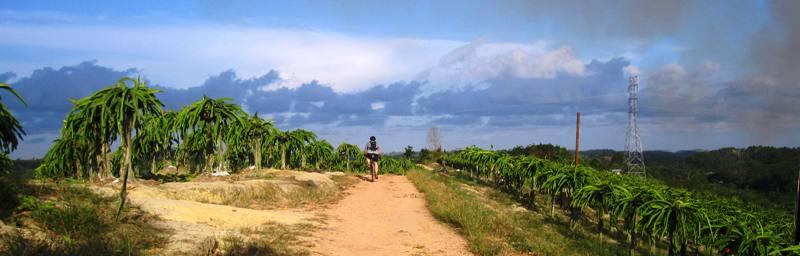 Sam riding through fields of dragon fruit, Balikpapan, Indonesia