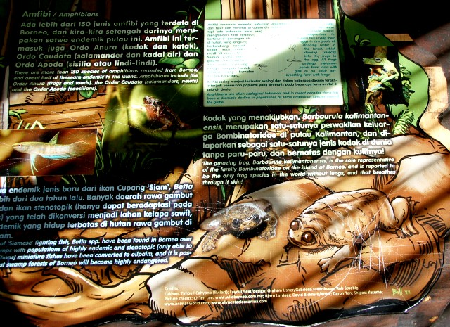 Barbourula Kalimantanensis