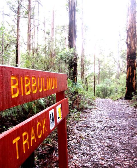 Bibbulmun Track.Pemberton NW Australia