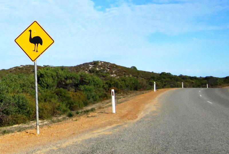 Emu Crossing. Road to Pinnacles Desert.Western Australia