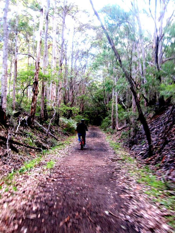 Margaret River to Cowaramup Rail Trail.Western Australia