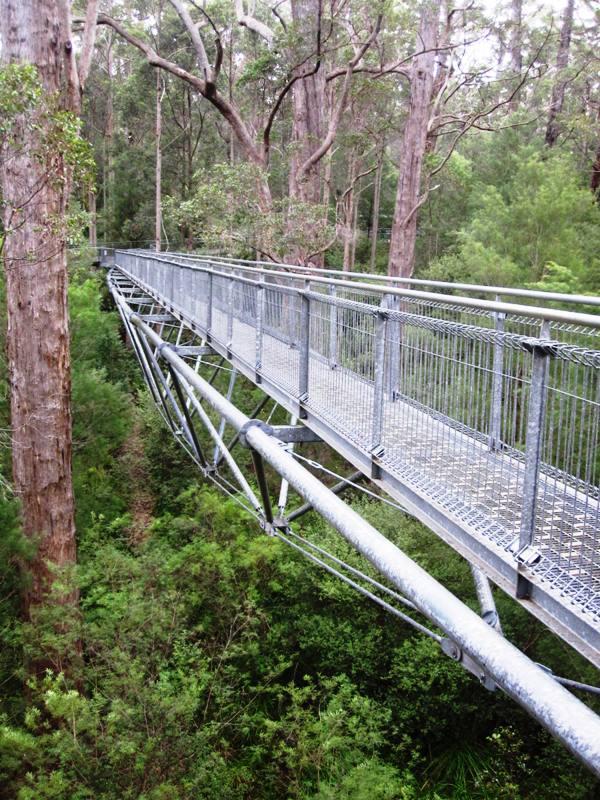 Treetop Walk.Walpole Australia