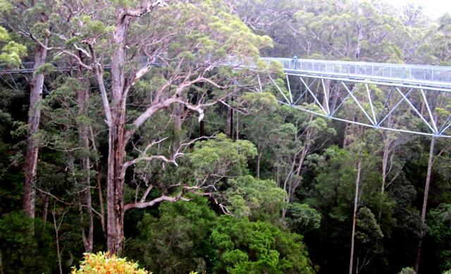 Treetop Walk.Walpole Western Australia