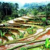 Walking through Jatiluwulih rice terraces in Bali Check out tongatimecomhellip
