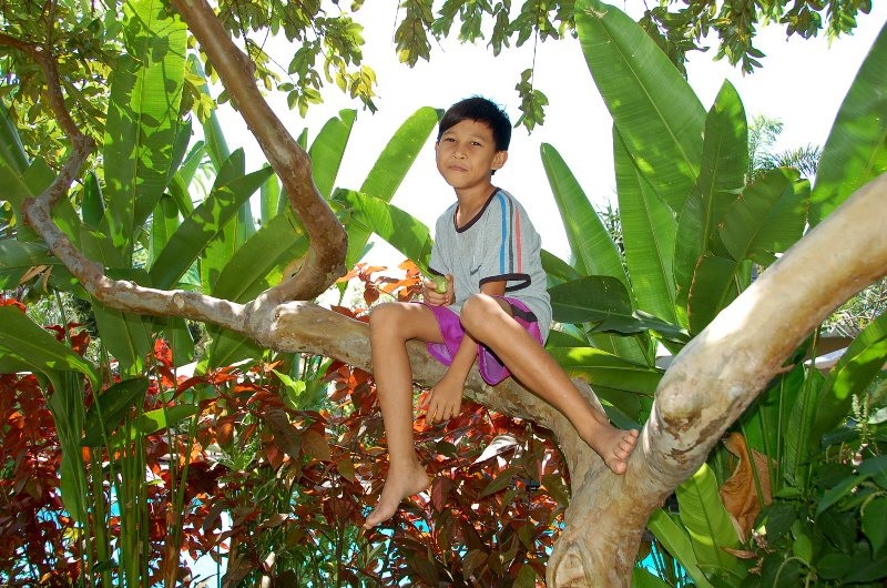 Boy eating guava in gardens of Tirta Sari Guesthouse and Bungalows.Pemuteran Bali