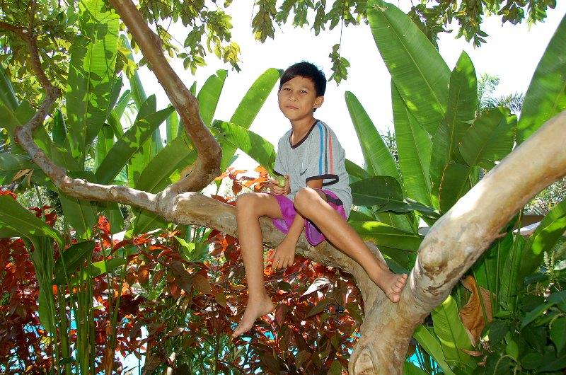 Boy eating guava in gardens of Tirta Sari Guesthouse and Bungalows.Pemuteran Bali