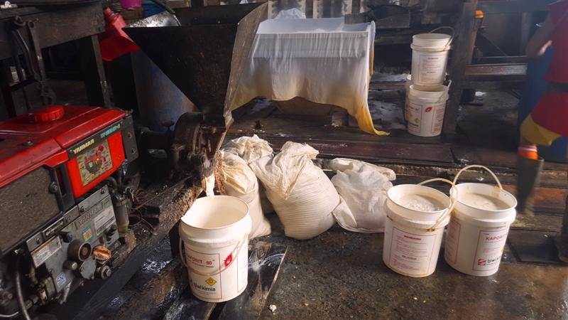Soy beans being ground into paste for tofu.Balikpapan Tofu Factory.