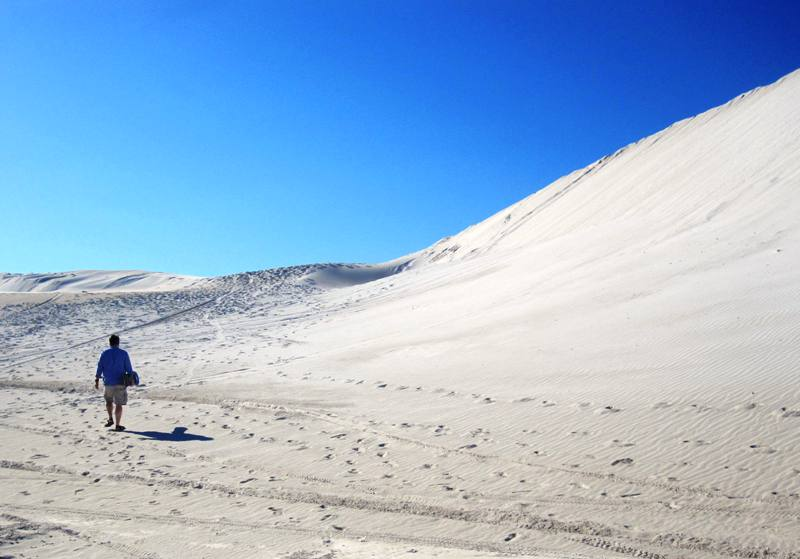 Intrepid Sam, walking to Lancelin Dunes.Western Australia