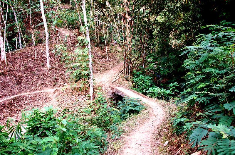 Forest Path to Waterfall.Munduk Bali