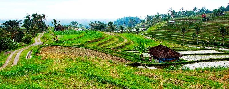 Jatiluwih Rice Fields.View.Bali Indonesia