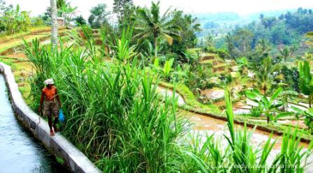 Jatiluwih Rice Fields: Bali's Cultural Landscape UNESCO Designation