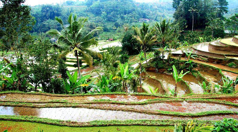 Jatiluwih Rice Padies, Bali Indonesia