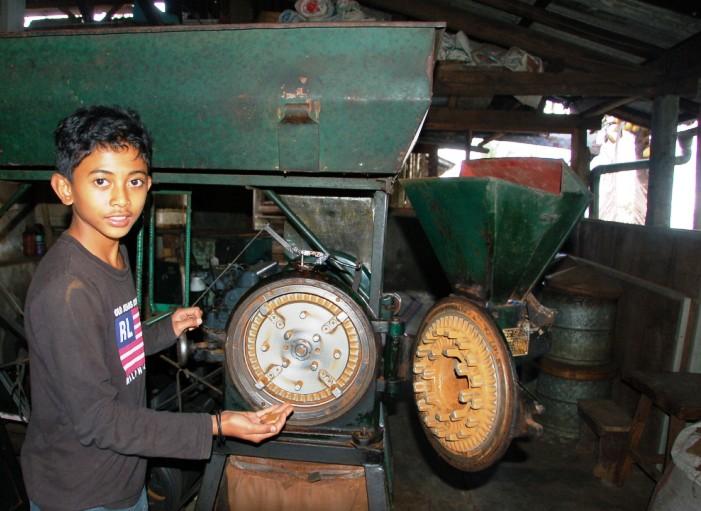 Bali Coffee: Made showing coffee grinder.Munduk Bali