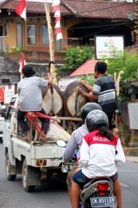 Main Road by Aditya Home Stay.Munduk Bali