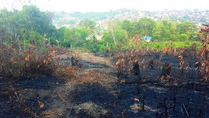 Indonesia air pollution.Slash and burned fields, Balikpapan.