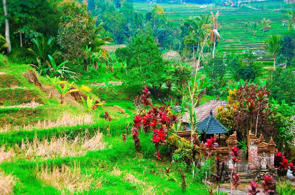 Temple at Jatiluwih Rice Terraces