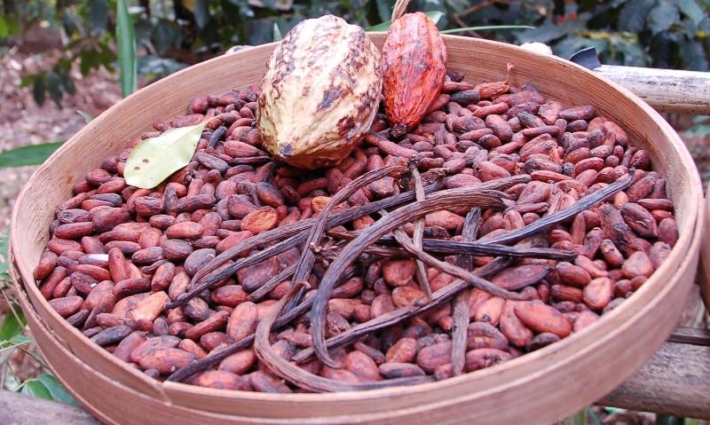 Vanilla and Cocoa.Munduk Bali